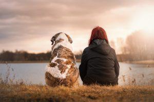 Huisdier hond