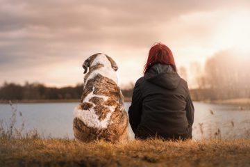 Welke huisdieren zijn het meest in trek in 2020?