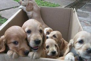 Hondenpuppy kopen