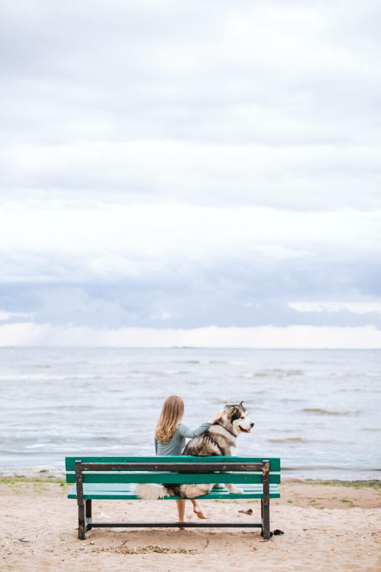 Ontspanningstips voor geadopteerde honden