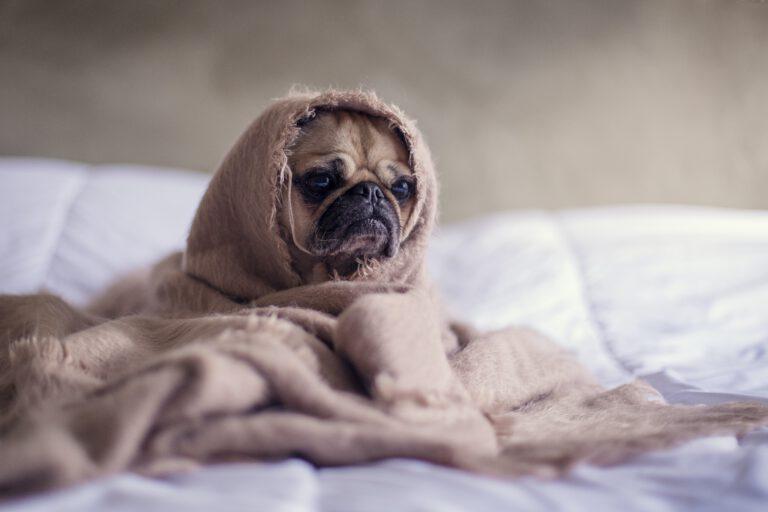 Wat als je hond niet alleen kan zijn?