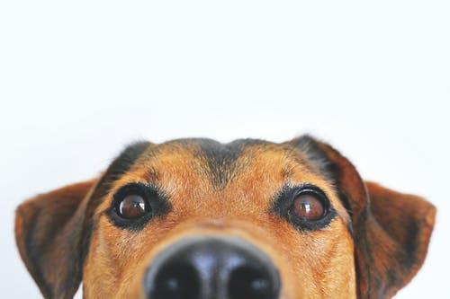 Fluffy hondenmanden: ideaal als je je hond comfort gunt