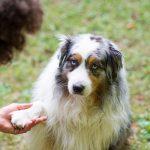 Haal een hondentrainer in huis