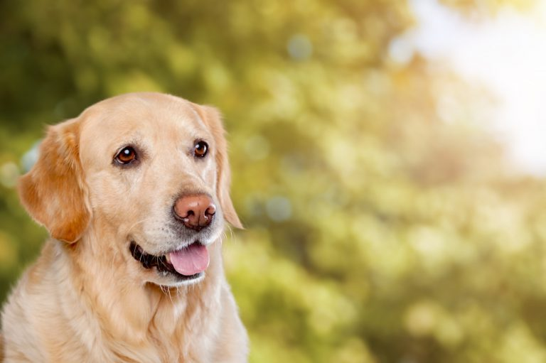 Heeft je hond fysieke of mentale problemen? Geef hem CBD-olie of -tabletten
