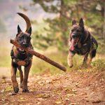 Wat is een hondenpension?